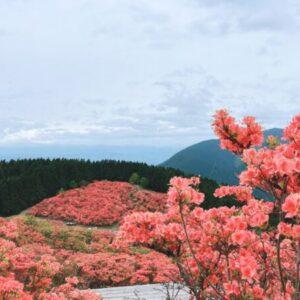 【葛城山】山頂から見える真っ赤な絨毯 ♪ 一目百万本のツツジ狩りへ♪